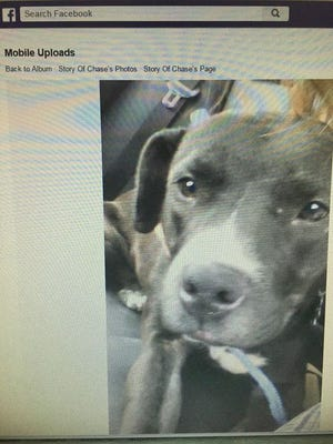 """A photo from a Facebook group called """"Story of Chase"""" picturing the dog that was killed earlier this month."""
