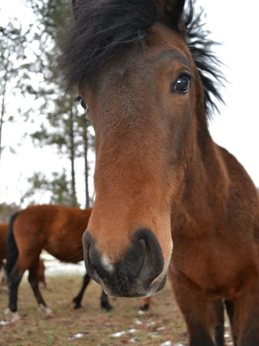 635986699239683653-horse.JPG