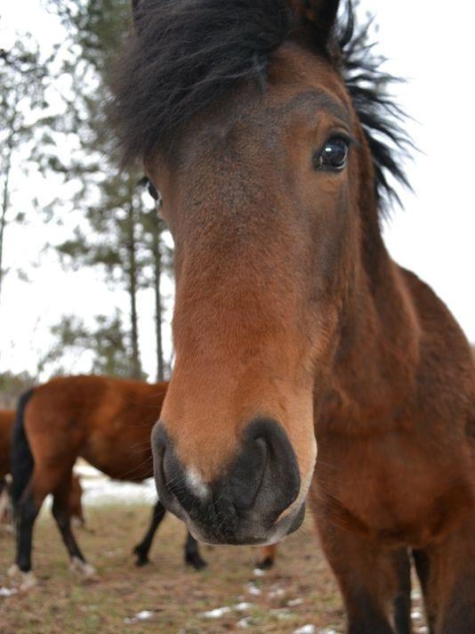 636081018419685121-horse.JPG