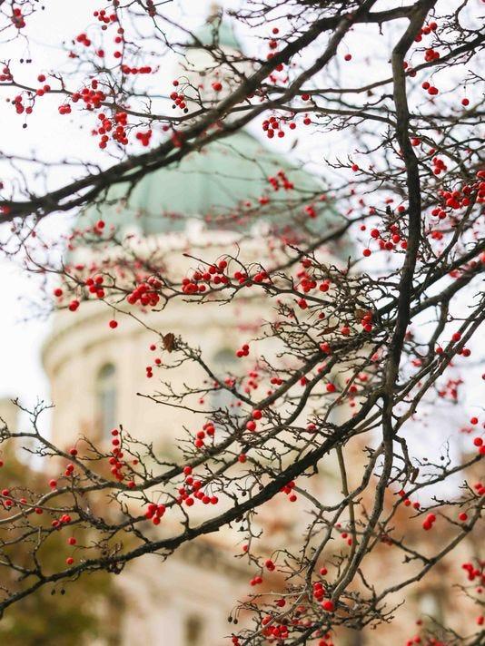 636264761899609097-statehouse-berries.jpg