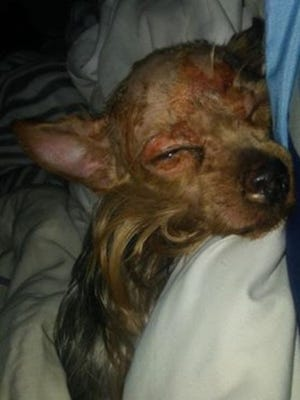 Bitty Boo was reportedly sprayed with hot water before being put in a freezer in West Monroe Wednesday.