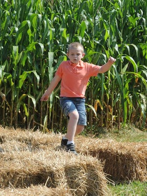 The corn maze will stay open next weekend.