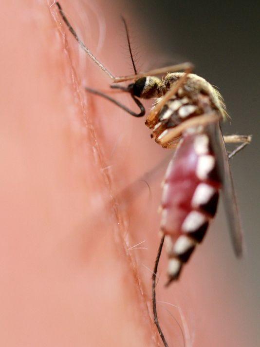 1400005816000-mosquito