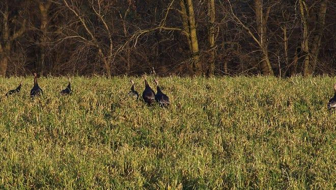 Production of upland birds has slipped