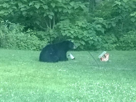 bear near michigan city DNR