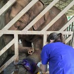 Watkins graduate works with elephants on life-changing trip to Thailand