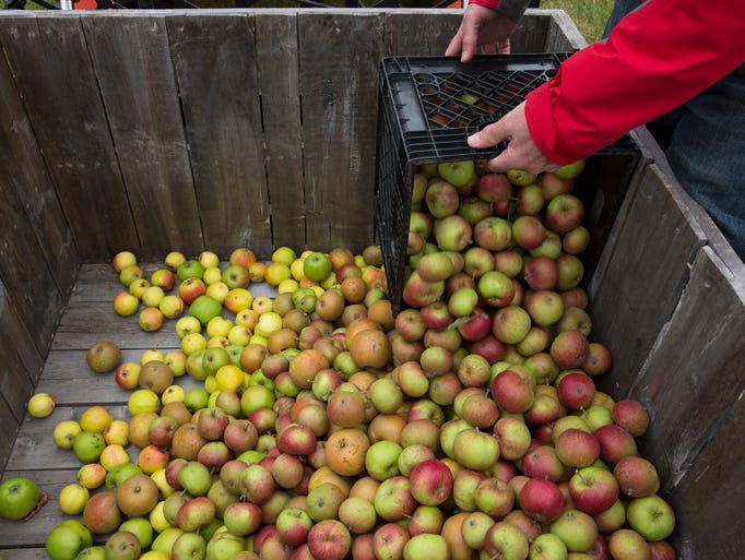 The Midwest Cider Trail From Minnesota To Indiana