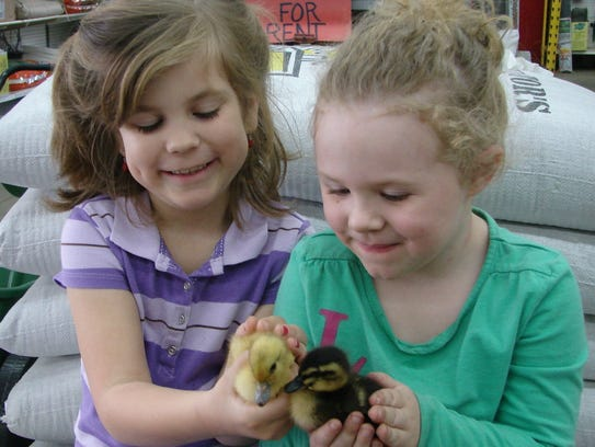 Grace Garr and Alexis Marcum hold baby ducks at a previous