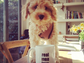 """Another member of the Styles clan, cockapoo Colin had a message for the One Direction singer's Instagram followers: """"Real men love cockapoos."""""""