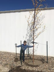 Kolben Aikins poses with a newly planted tree in Shelby.