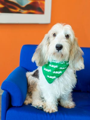 P&G's Iams and Eukanuba pet-food divisions have a dog in management -- a Petit Basset Griffon Vendeen named Griffin serves as the VP of Canine Communications.