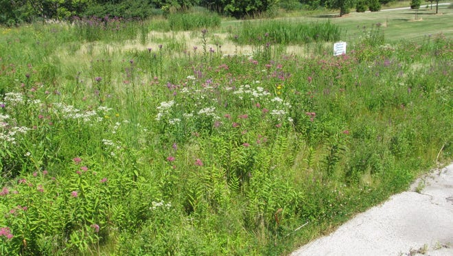 For a typical prairie mix that has a combination of 40-50 percent grasses and 50-60 percent wildflowers, it's best to seed from September until the ground freezes.