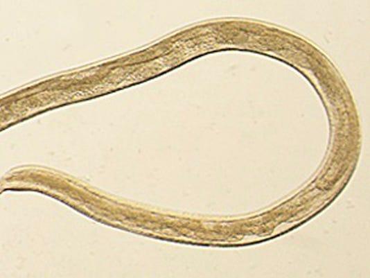 WSF 0216 worms in eye 1.jpg