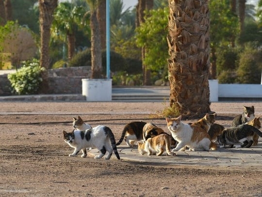 Free-roaming cats congregate in colonies near a food