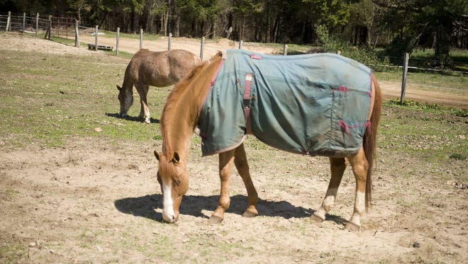 A Williamstown woman is accused of providing veterinary care to horses without a license.
