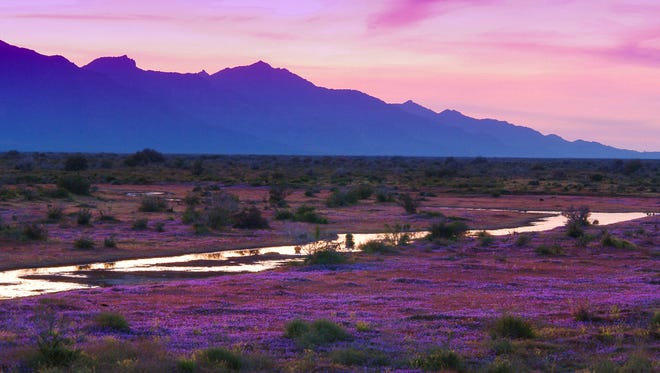 A carpet of owl clover mirrors a lavish sunset on Arizona 347.