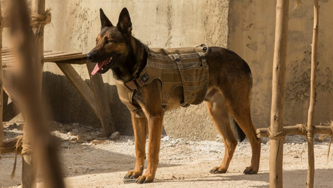 Max (as played by Carlos) in a scene from 'Max,' the tale of a military service dog with the Marines in Afghanistan.