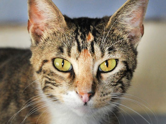 Pet of the Week- Blanche