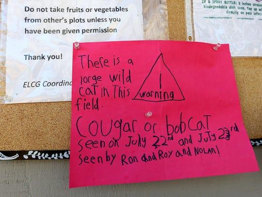Nolan and Mila Venti, both 7, made this sign, informing gardeners about a possible cougar or bobcat sighting, and posted it at the Ellen Lane Community Garden in July. On Monday, a big cat was seen in the field adjacent to the garden, and the adults with Nolan now believe it was a cougar.