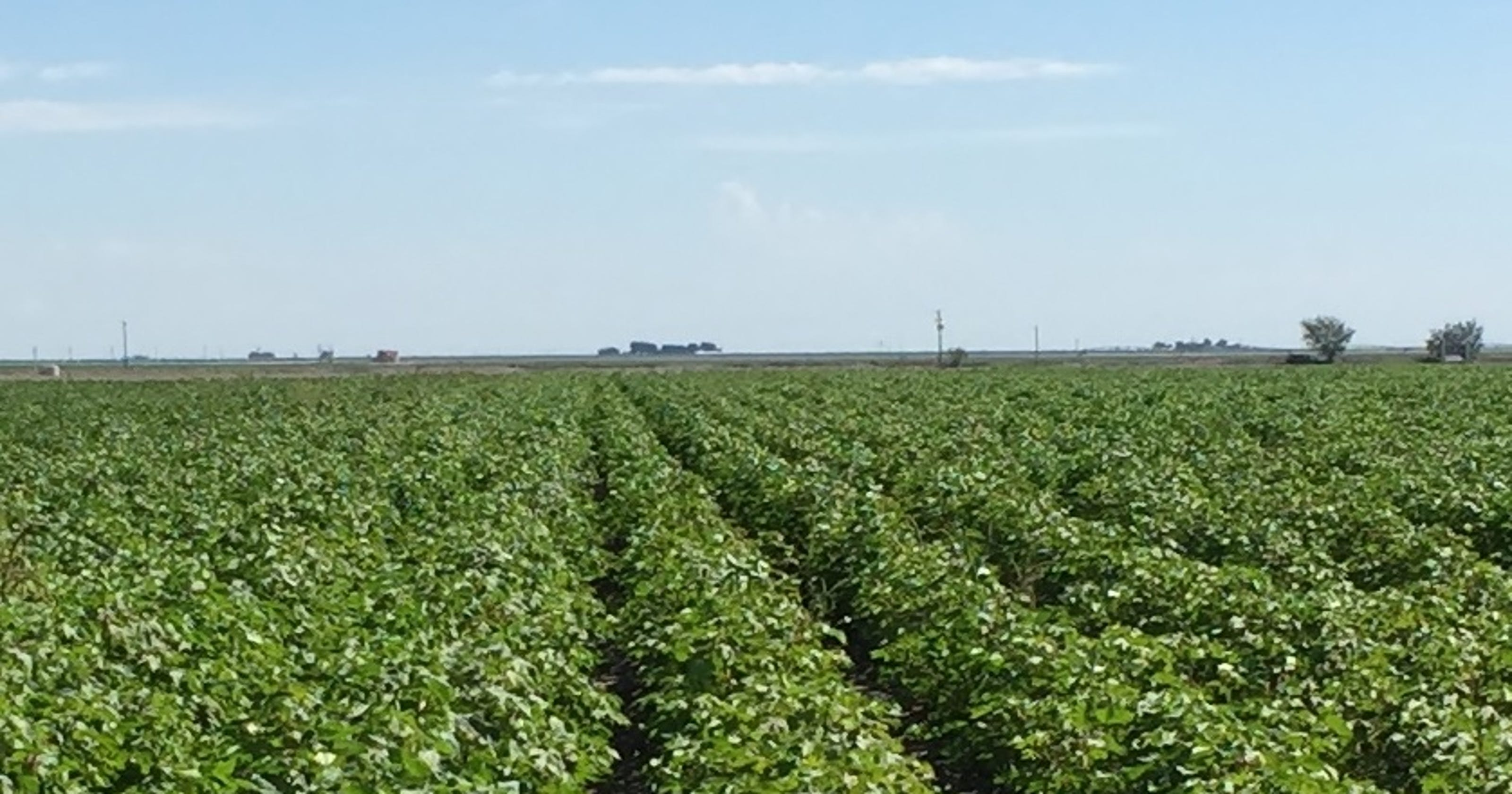 Texas data critical in agricultural statistics |Texas Agriculture
