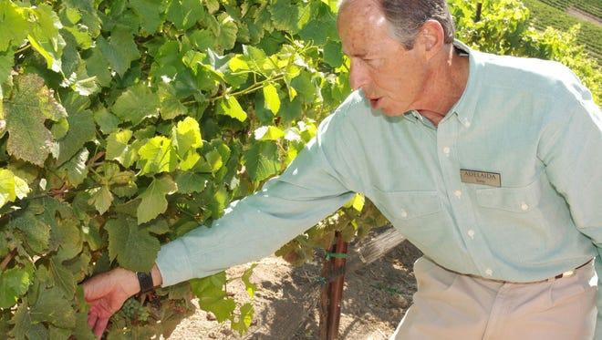 Tony Hermann, wine educator for Adelaida Cellars, checks the grapes in one of the vineyards.