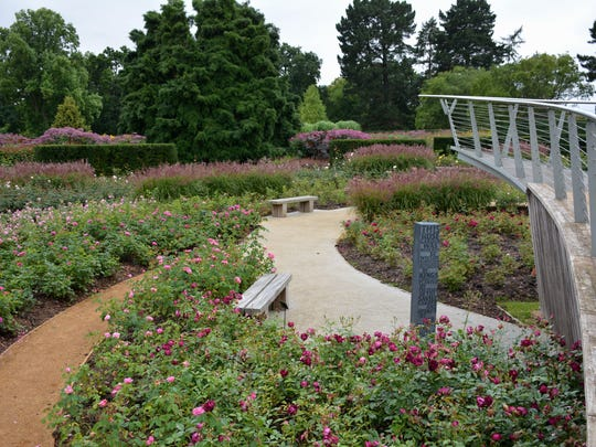 Redesigned in 2010, the Savill Garden's rose display is arranged in a swirling pattern highlighted with an elevated walkway.