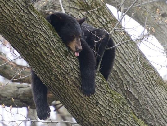 636616252301099208-black-bear.jpg