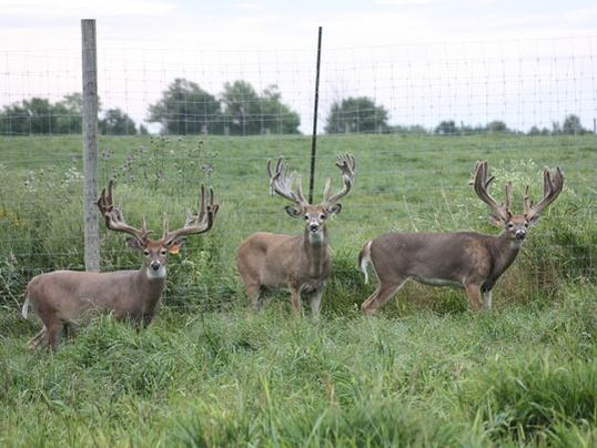 636640596112358290-Deer-farm-photo-by-Laurie-Seale-Whitetails-of-Wisconsin.jpg