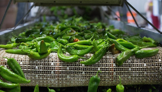 Green Chile being processed at the Young Guns Chile and produce processing plant. Friday September 8, 2017.
