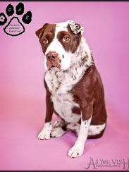 Patches is one of the 19 dogs still up for adoption