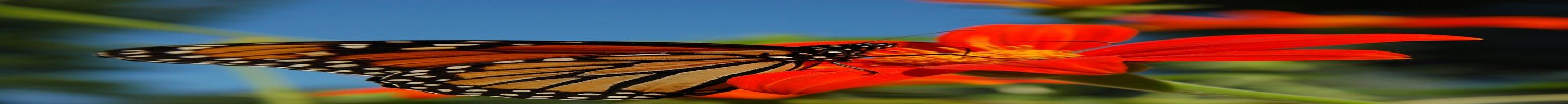 Butterfly Wonderland in Scottsdale working to educate on plight of butterflies