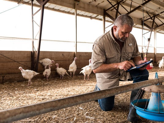 Cargill offers more traceable turkeys for Thanksgiving dinners