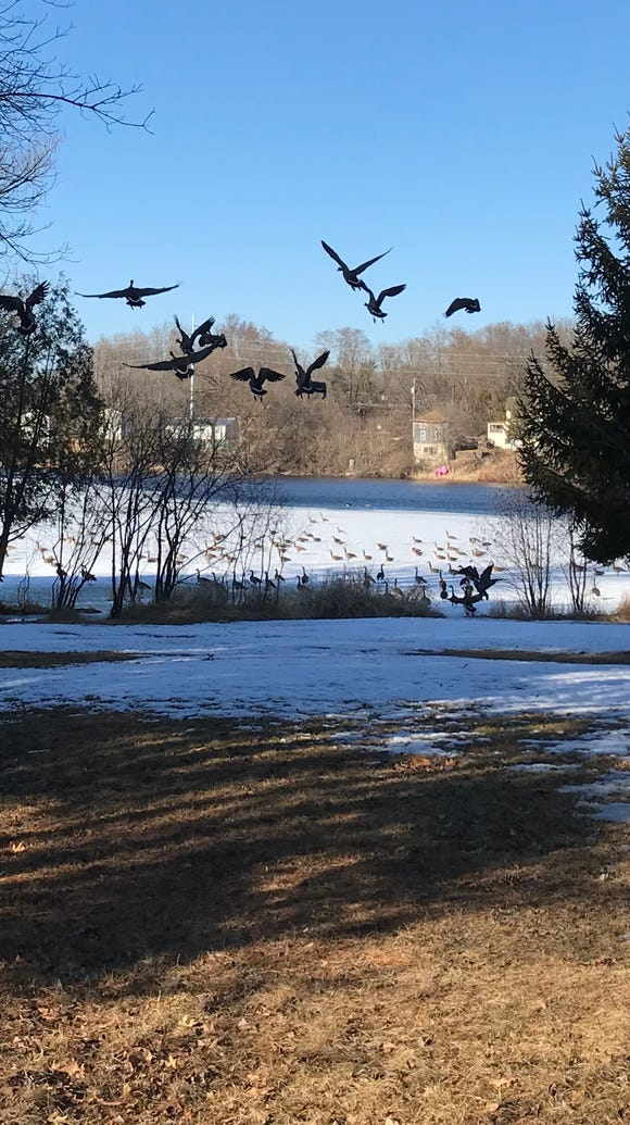 Geese taking off from Mill Pond in Waupaca. I took
