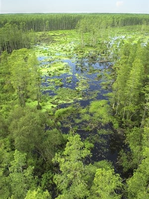 Whether or not Babcock's cypress trees can be logged is on the table as an advisory board hammers out details of the preserve's management pla.