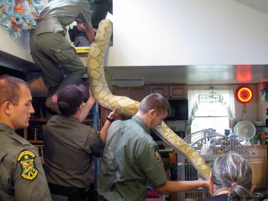 Vermont game wardens and snake experts from the Massachusetts-based Rainforest Reptile Shows remove an 18-foot, 220-pound reticulated python from the home of Pat Howard on Aug. 25, 2015, in North Clarendon, Vt..