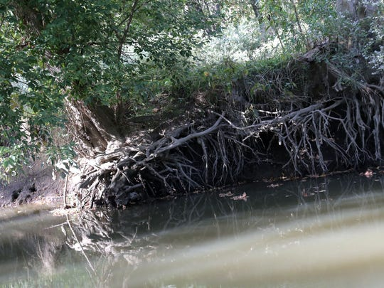 Falling trees, or those with exposed roots to the Black Fork River are being removed on the Dave Grauer farm near Shiloh.