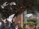 Family members of crime victims release doves outside
