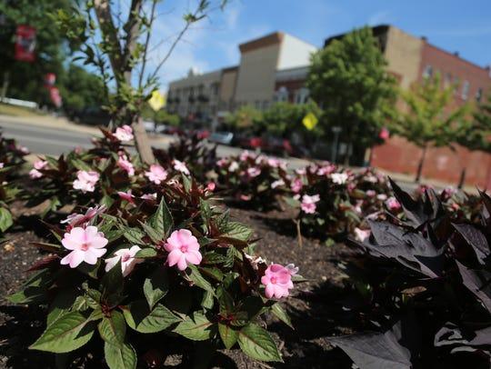 Flowers bloom around Mansfield in preparation of judging