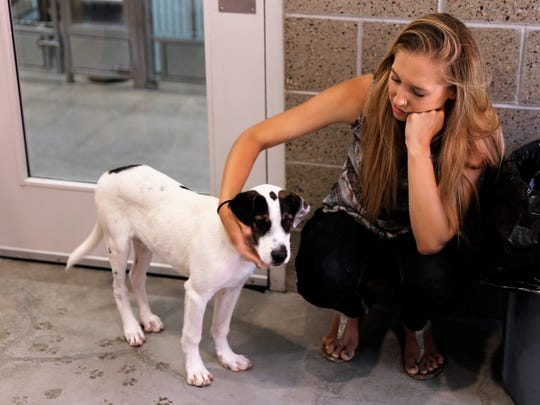 """Bloomfield resident Mikayla Nourse pets a shelter dog during the """"Priceless Pets"""" event Thursday at the Farmington Regional Animal Shelter."""