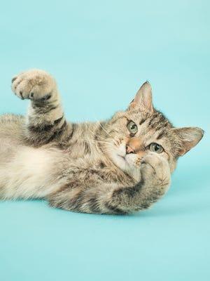 Cara the cat