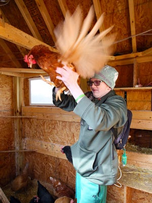 Jacob Counts, 18, handles one of his 26 egg-laying chickens in the coop behind his home. Counts has autism and kidney disease which limits what he can do. Raising chickens and selling eggs keeps him active and happy. Counts is looking to expand his coop and run, and he plans to get certified to expand his sales potential.