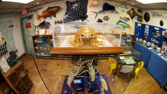 Ostego Bay Foundation Marine Science Center has been remodeled and new exhibits have been added.
