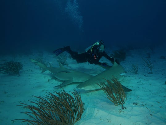 Shark Attack Pensacola Beach