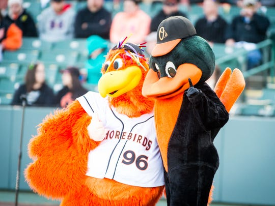 The Delmarva Shorebirds and Baltimore Orioles mascots at Perdue Stadium.