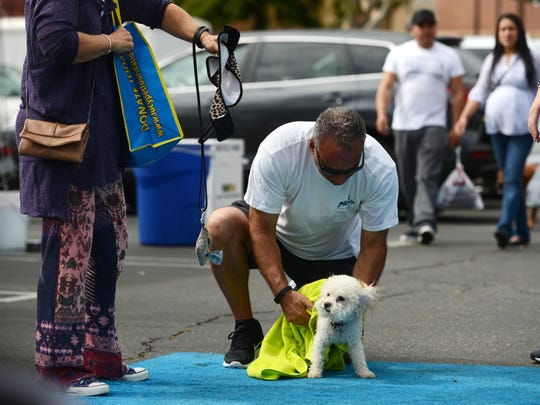 Bijou gets towel dried by her owner Tony Iannolo, of