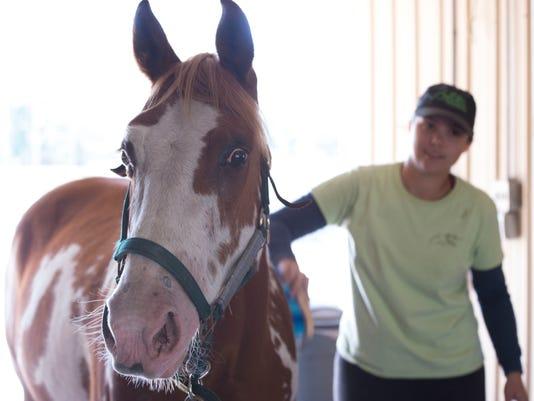 0316 SA HORSE RESCUE