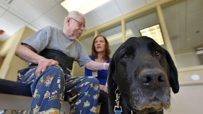 Puma, a trained and certified facility dog, works with a patient during Puma's last rounds before retiring at Methodist Rehabilitation Center in Jackson recently.