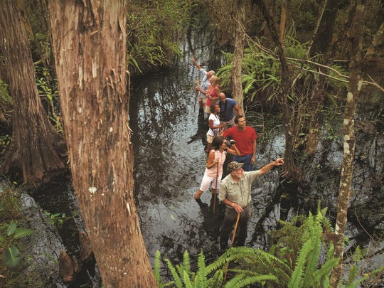 Swamp walk in Big Cypress National Preserve