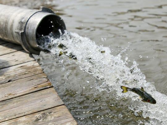 Atlantic salmon exit into Lake Huron on  at Lexington State Harbor.