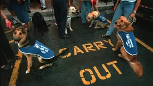 A group of Southeastern Guide Dog puppies wait in the parking lot at Carrabba's Italian Grill in south Fort Myers as their raisers wait for a table. Lee and Collier County raisers from Southeastern Guide Dogs Inc. took the puppies on a restaurant outing as part of their training for becoming seeing eye dogs for the blind.